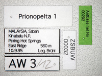 Prionopelta 1 Label