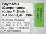 Polyrhachis equina Smith, 1857 Label