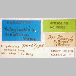 Polyrhachis montana Hung, 1970 Label