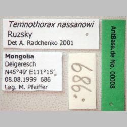 Temnothorax nassonowi Ruzsky, 1895 Label